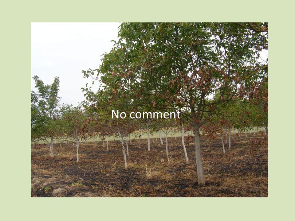 No comment No comment