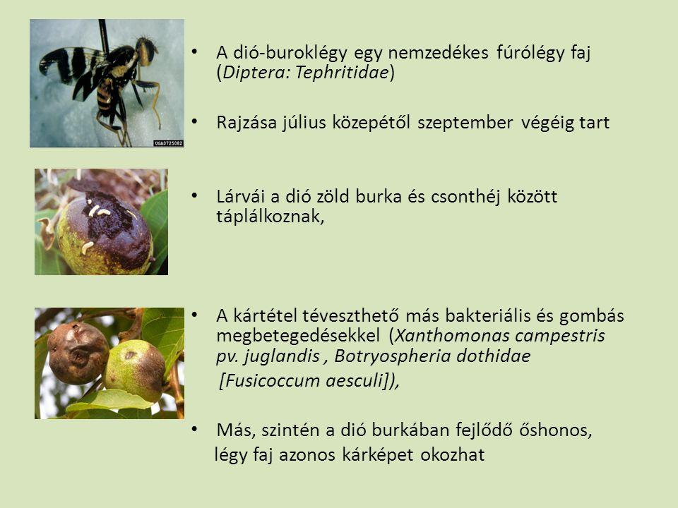A dió-buroklégy egy nemzedékes fúrólégy faj (Diptera: Tephritidae)