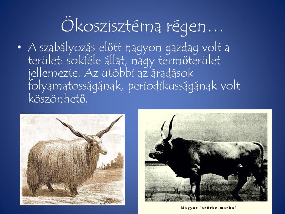 Ökoszisztéma régen…