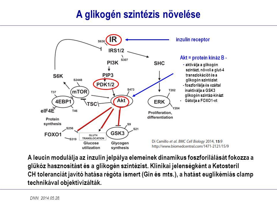 A glikogén szintézis növelése