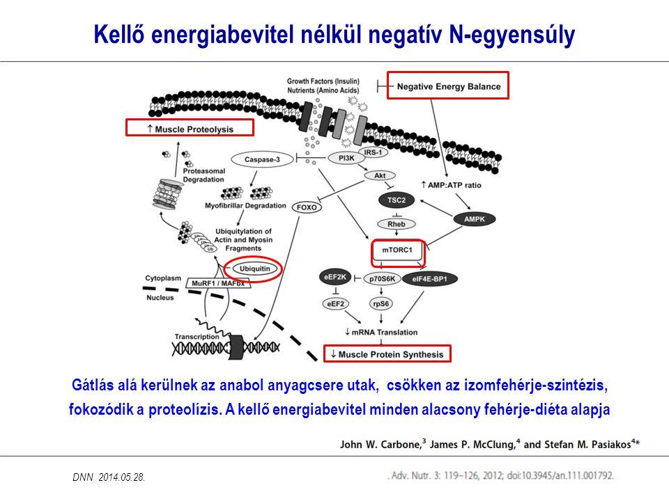 Kellő energiabevitel nélkül negatív N-egyensúly