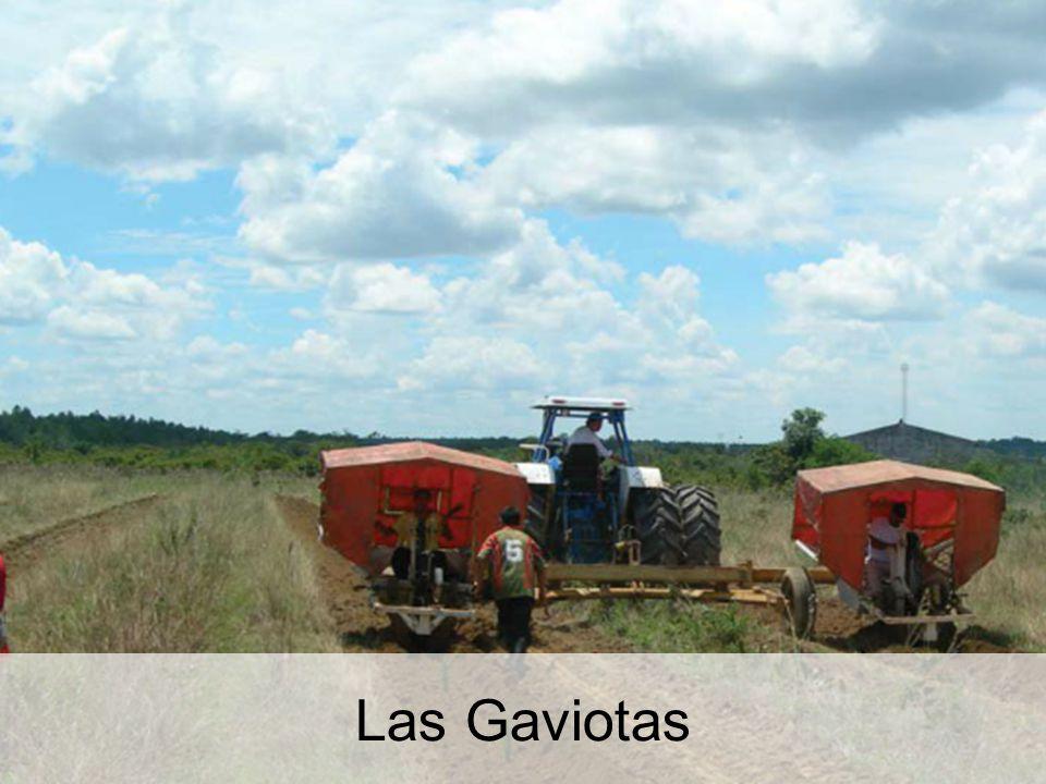 Las Gaviotas Las Gaviotas: a helyreállított erdő, szavanna helyett. 40
