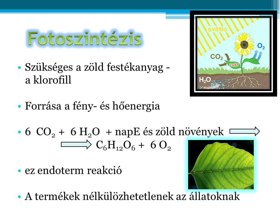 Fotoszintézis Szükséges a zöld festékanyag - a klorofill