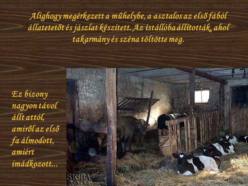 Alighogy megérkezett a műhelybe, a asztalos az első fából állatetetőt és jászlat készített. Az istállóba állították, ahol takarmány és széna töltötte meg.