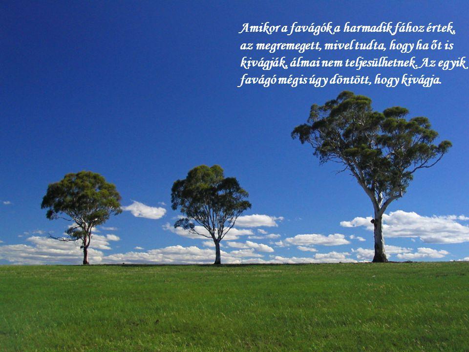 Amikor a favágók a harmadik fához értek, az megremegett, mivel tudta, hogy ha őt is kivágják, álmai nem teljesülhetnek.