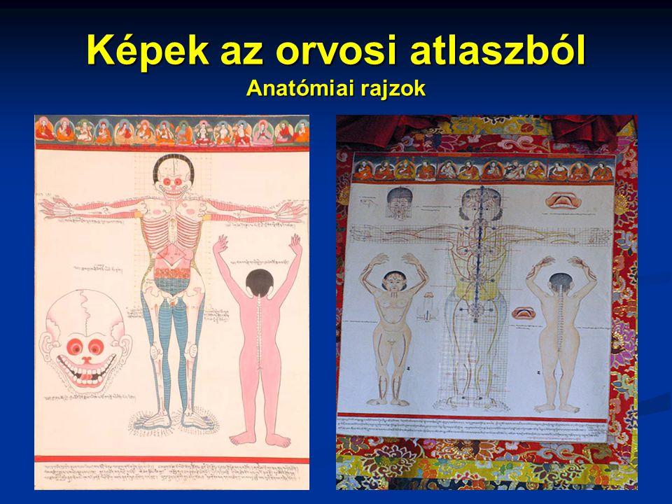 Képek az orvosi atlaszból Anatómiai rajzok
