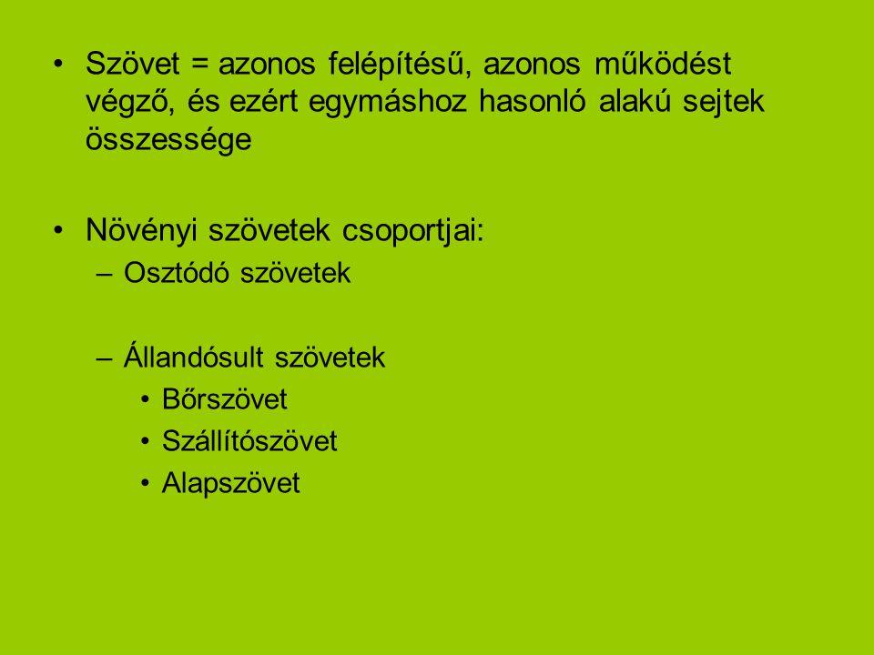 Növényi szövetek csoportjai:
