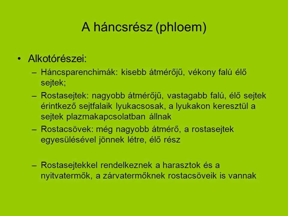 A háncsrész (phloem) Alkotórészei: