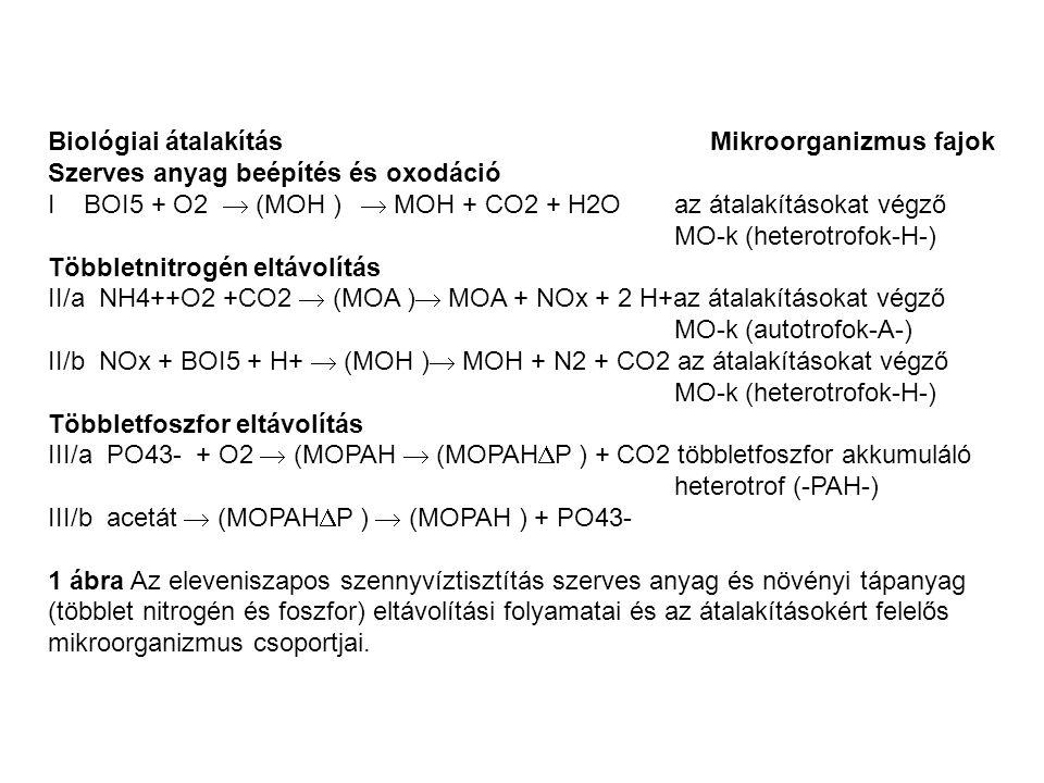Biológiai átalakítás Mikroorganizmus fajok