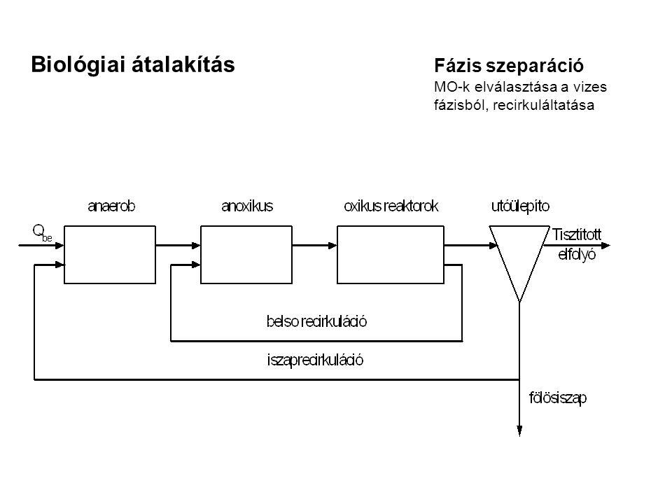 Biológiai átalakítás Fázis szeparáció