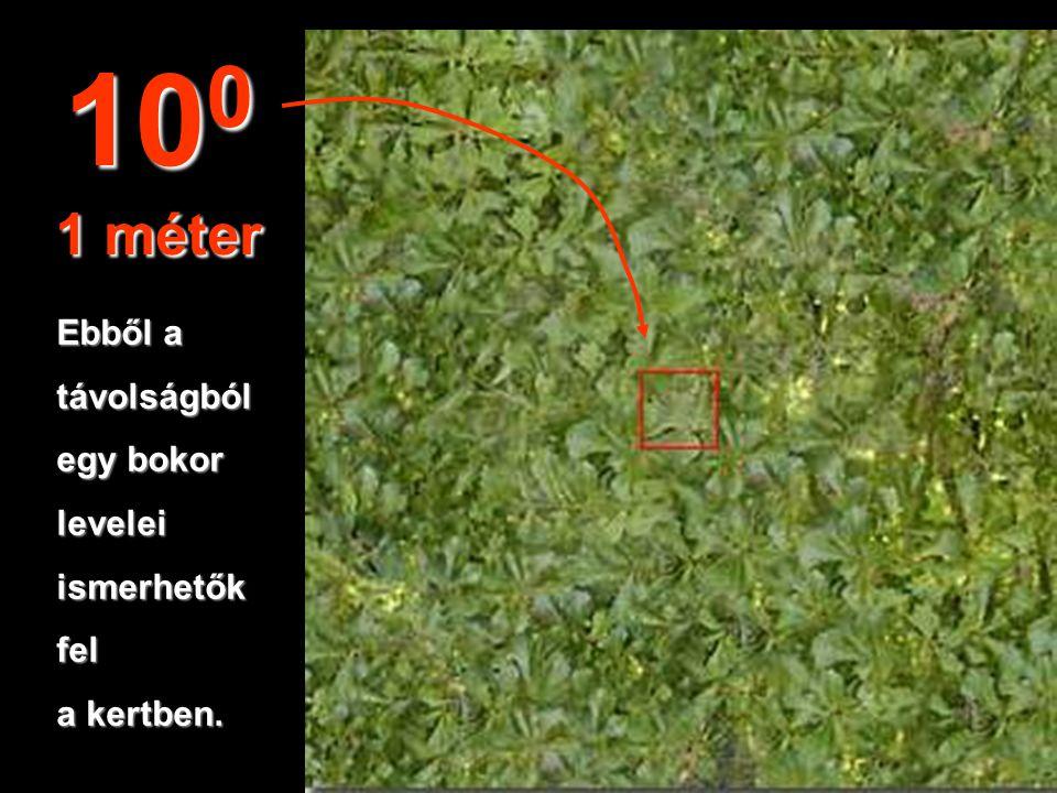 100 1 méter Ebből a távolságból egy bokor levelei ismerhetők fel