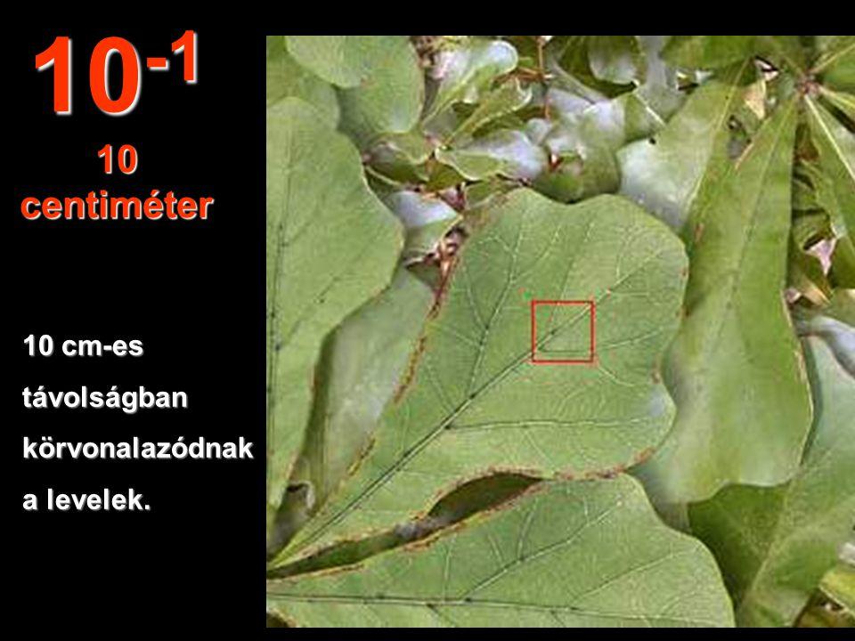 10-1 10 centiméter 10 cm-es távolságban körvonalazódnak a levelek.