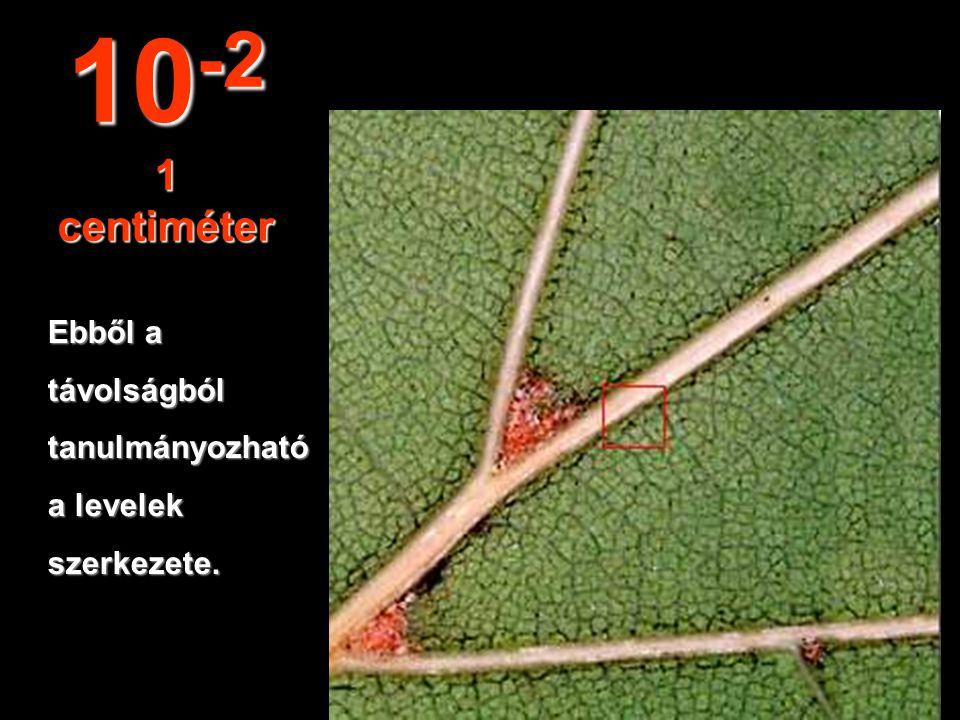 10-2 1 centiméter Ebből a távolságból tanulmányozható a levelek