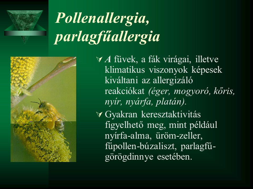 Pollenallergia, parlagfűallergia