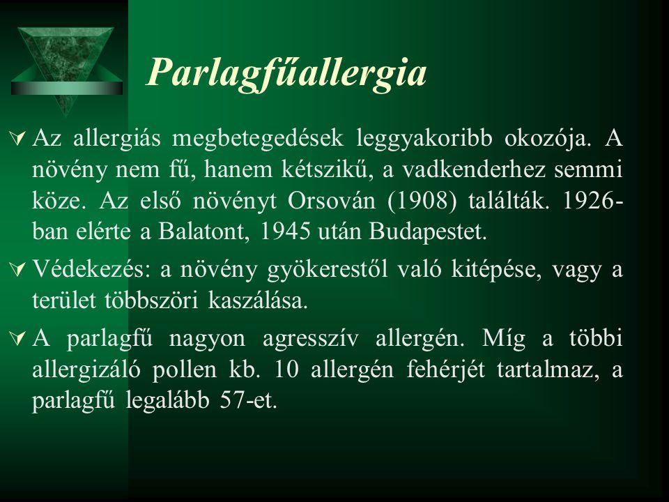 Parlagfűallergia