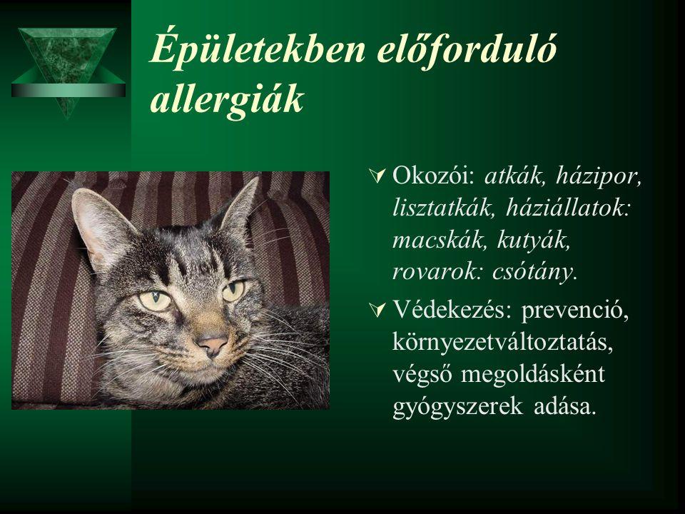 Épületekben előforduló allergiák