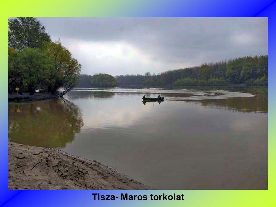 Tisza- Maros torkolat
