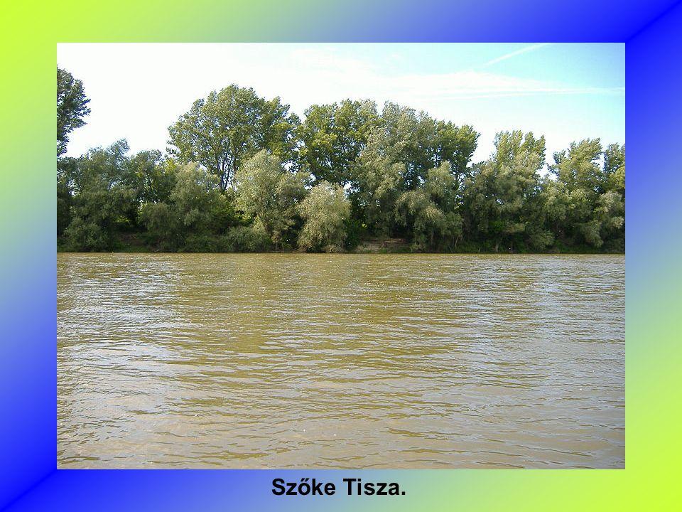 Szőke Tisza.