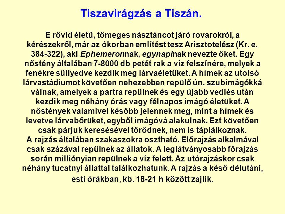Tiszavirágzás a Tiszán.