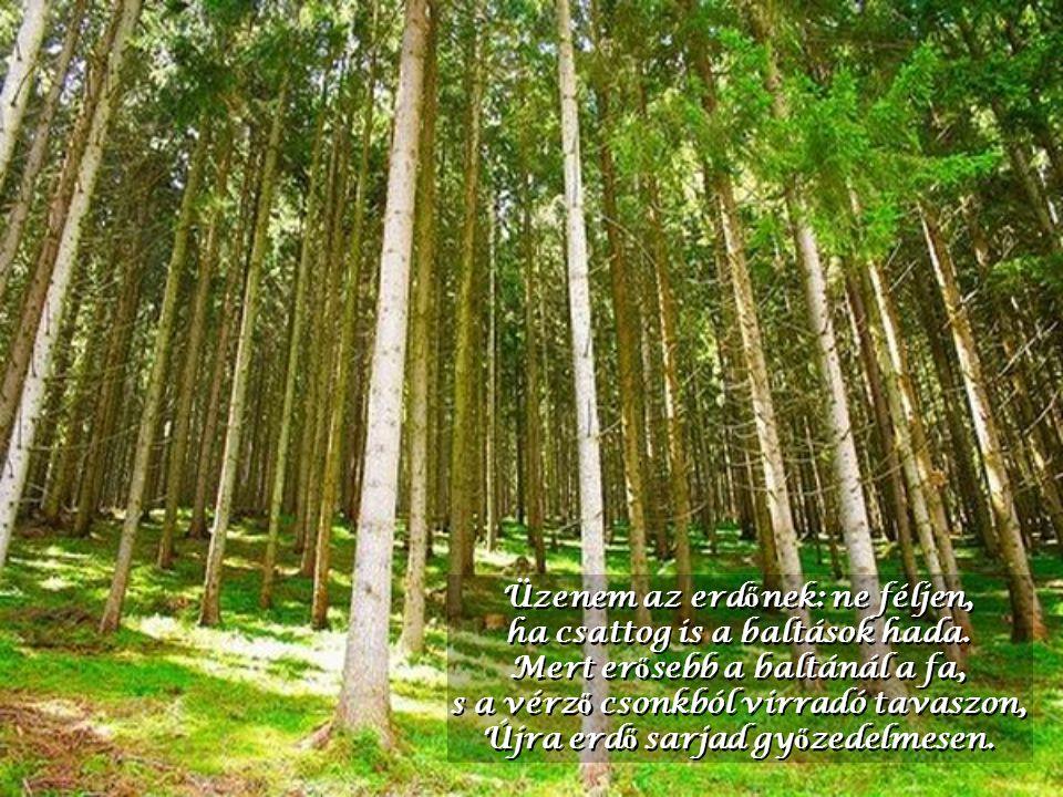 Üzenem az erdőnek: ne féljen, ha csattog is a baltások hada.