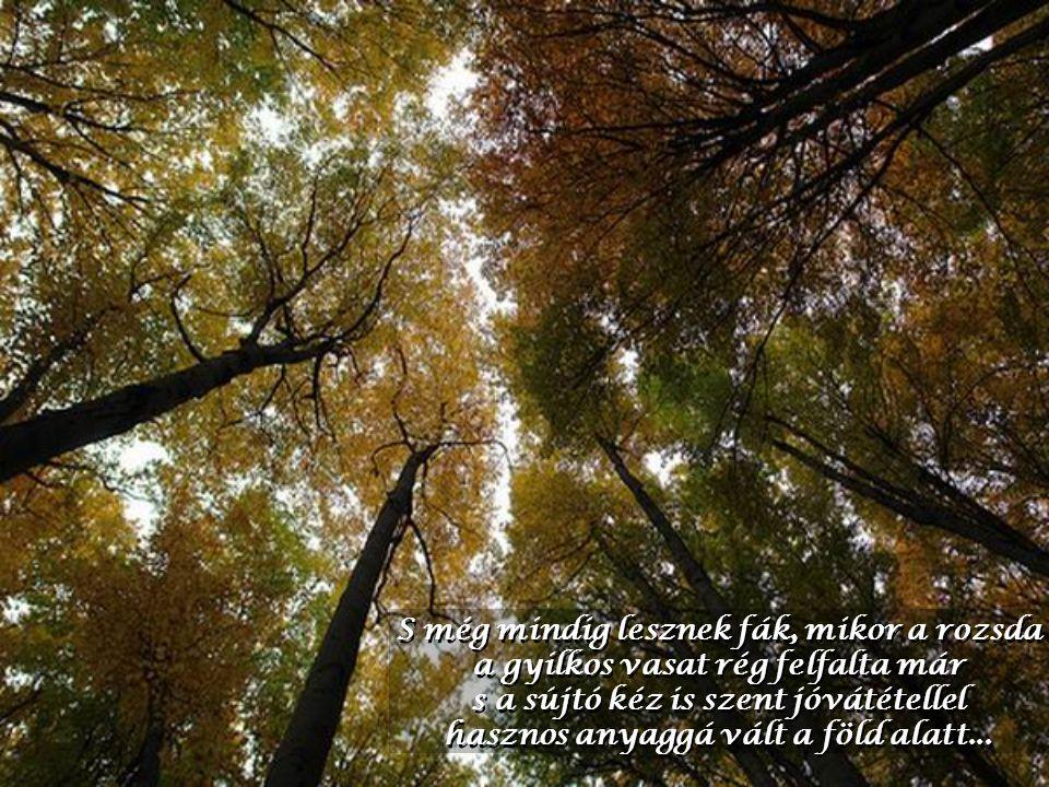 S még mindig lesznek fák, mikor a rozsda