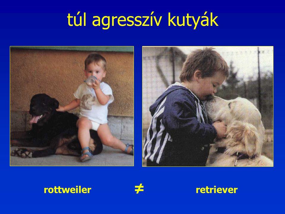 túl agresszív kutyák - Nincs golden rottweiler.