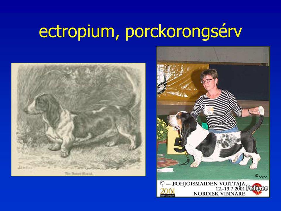 ectropium, porckorongsérv