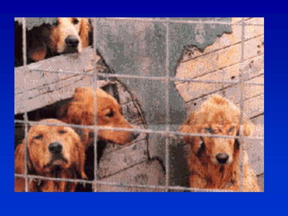 Az ilyen körülmények között tenyésztett kutyáktól nem várható a megfelelő szocializáció, kötődés még akkor sem, ha vele születetten benne vannak ezek a tulajdonságok.