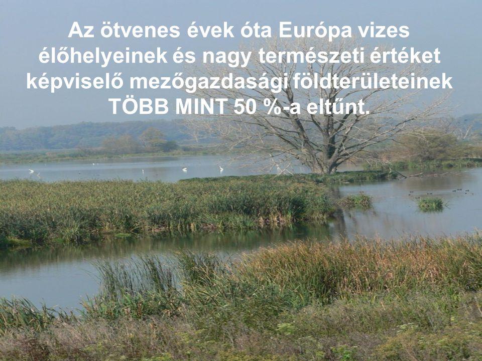 Az ötvenes évek óta Európa vizes élőhelyeinek és nagy természeti értéket képviselő mezőgazdasági földterületeinek TÖBB MINT 50 %-a eltűnt.