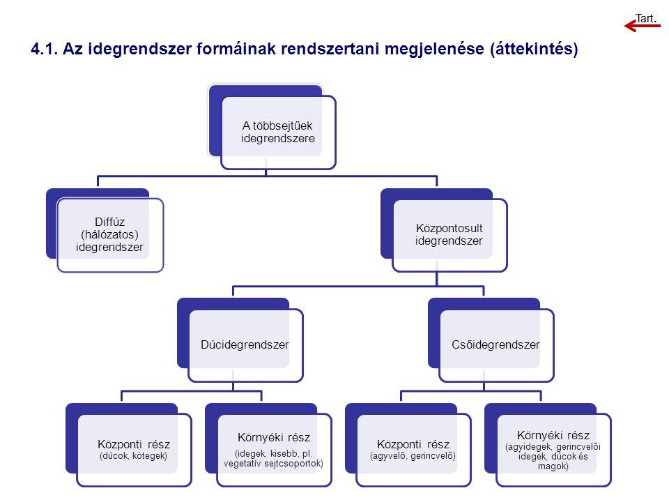 4.1. Az idegrendszer formáinak rendszertani megjelenése (áttekintés)