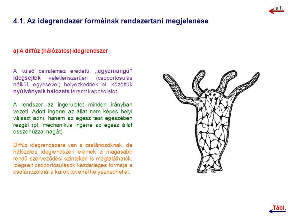 4.1. Az idegrendszer formáinak rendszertani megjelenése