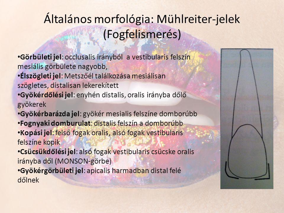 Általános morfológia: Mühlreiter-jelek (Fogfelismerés)