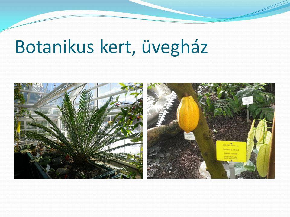 Botanikus kert, üvegház