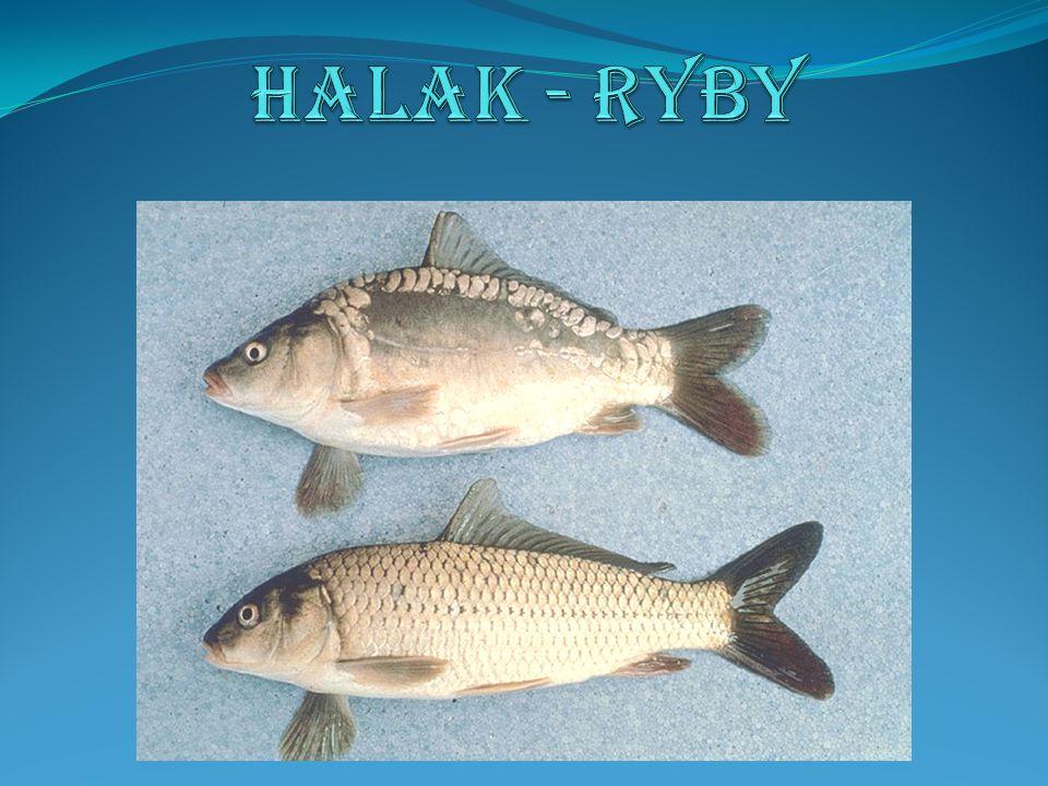 Halak - Ryby