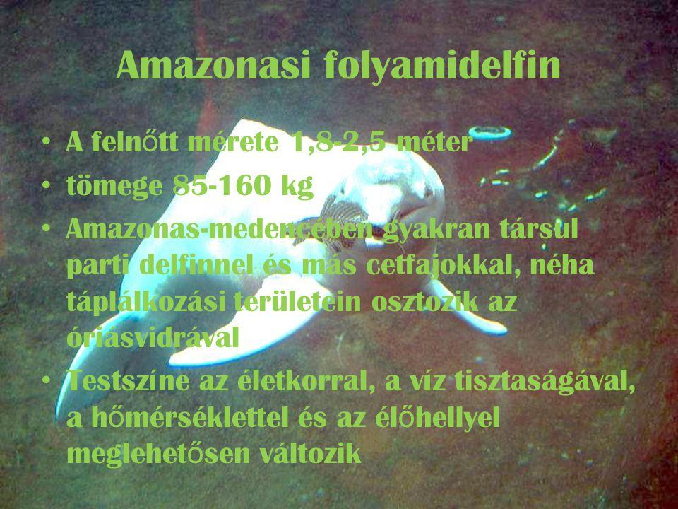Amazonasi folyamidelfin