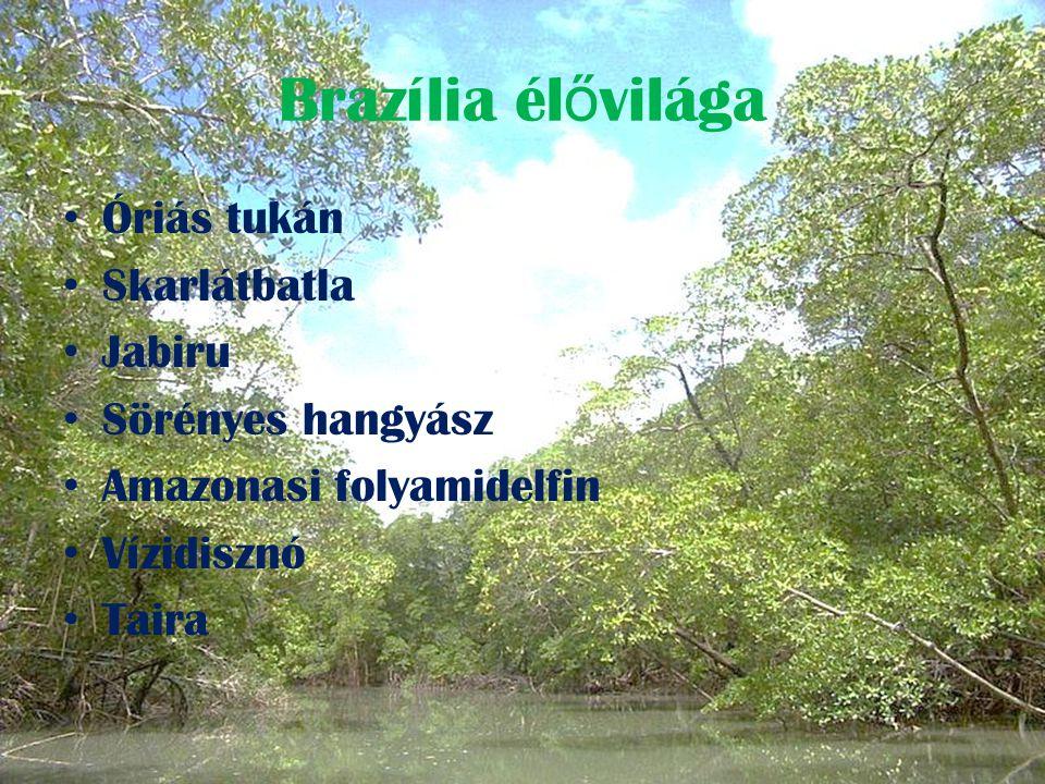 Brazília élővilága Óriás tukán Skarlátbatla Jabiru Sörényes hangyász