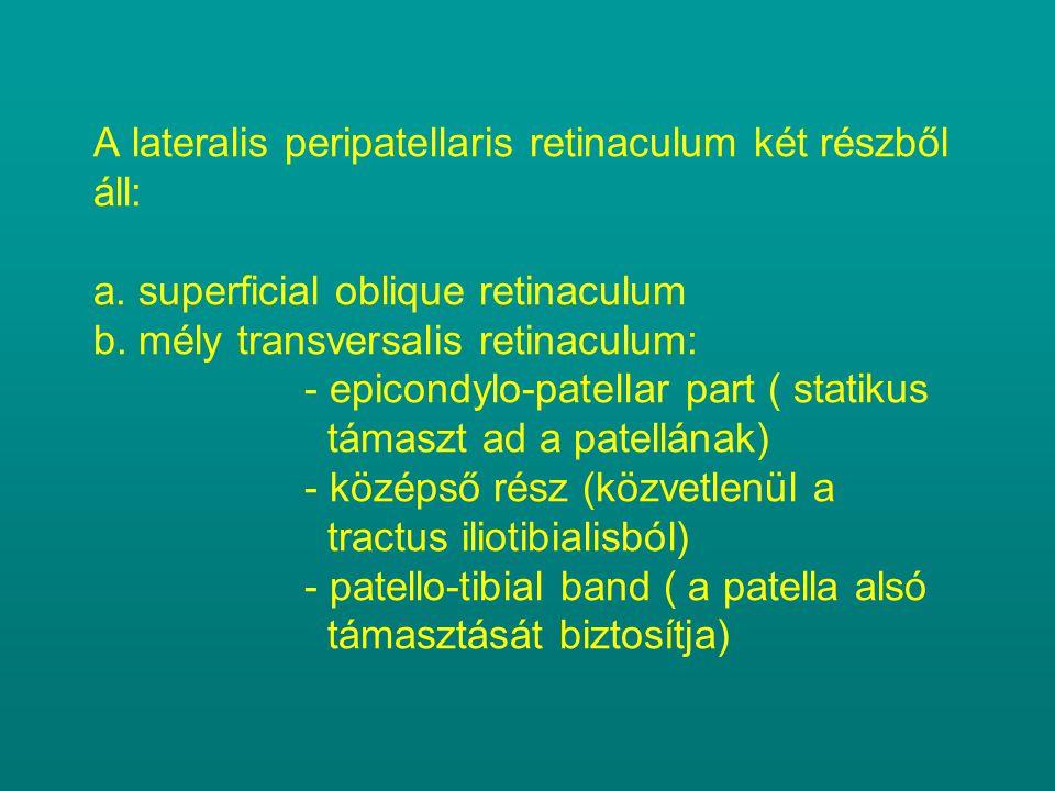 A lateralis peripatellaris retinaculum két részből áll: a