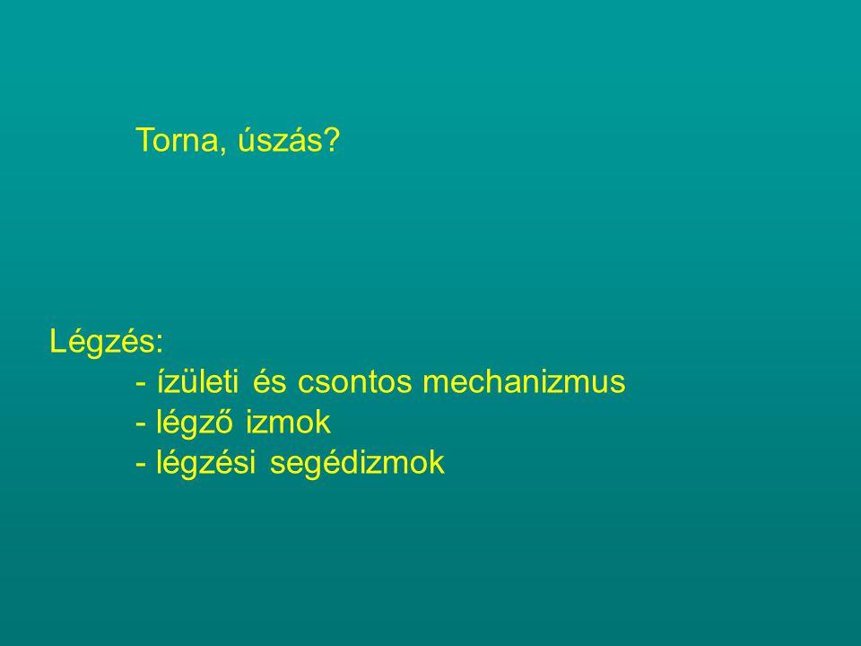 Torna, úszás Légzés: - ízületi és csontos mechanizmus - légző izmok - légzési segédizmok