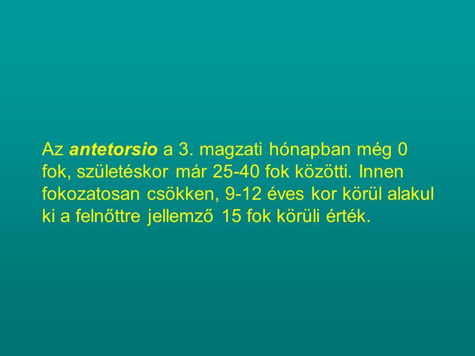 Az antetorsio a 3. magzati hónapban még 0 fok, születéskor már 25-40 fok közötti.
