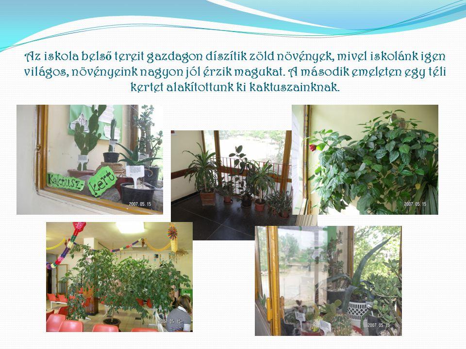 Az iskola belső tereit gazdagon díszítik zöld növények, mivel iskolánk igen világos, növényeink nagyon jól érzik magukat.