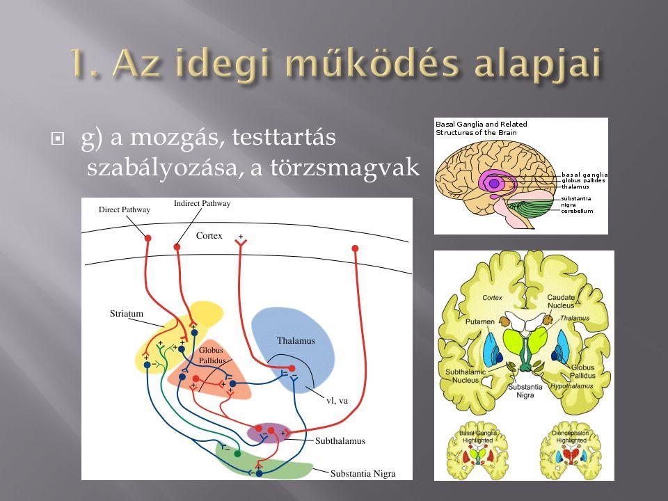 1. Az idegi működés alapjai