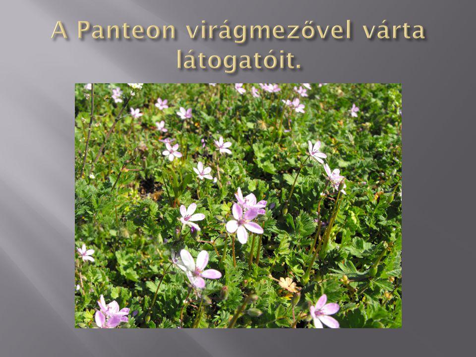 A Panteon virágmezővel várta látogatóit.
