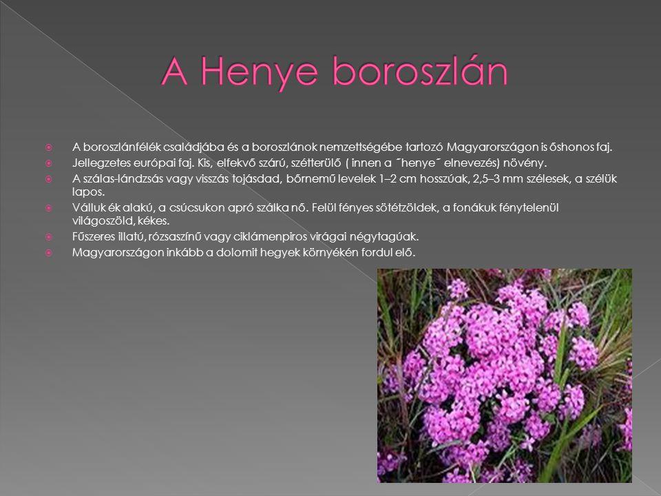 A Henye boroszlán A boroszlánfélék családjába és a boroszlánok nemzettségébe tartozó Magyarországon is őshonos faj.