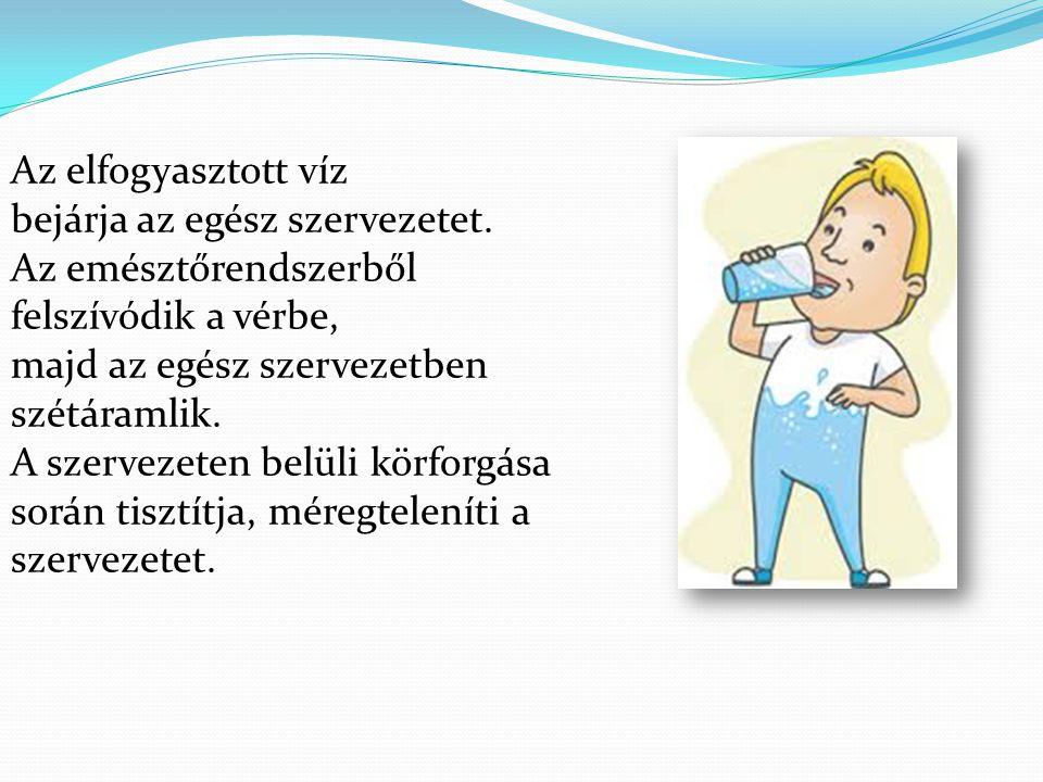 Az elfogyasztott víz bejárja az egész szervezetet. Az emésztőrendszerből. felszívódik a vérbe, majd az egész szervezetben szétáramlik.