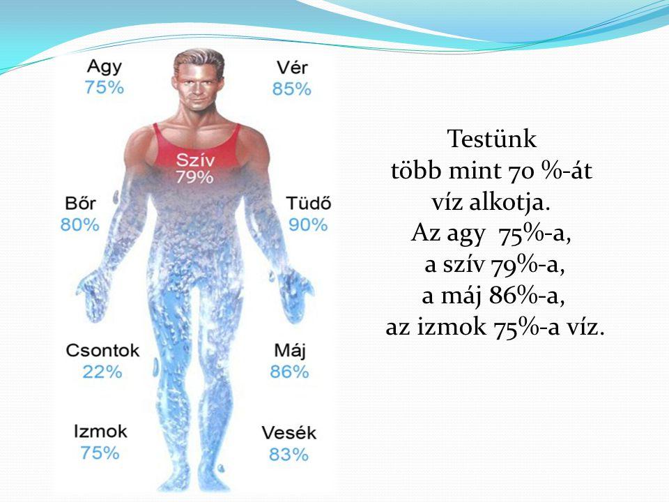 Testünk több mint 70 %-át. víz alkotja.