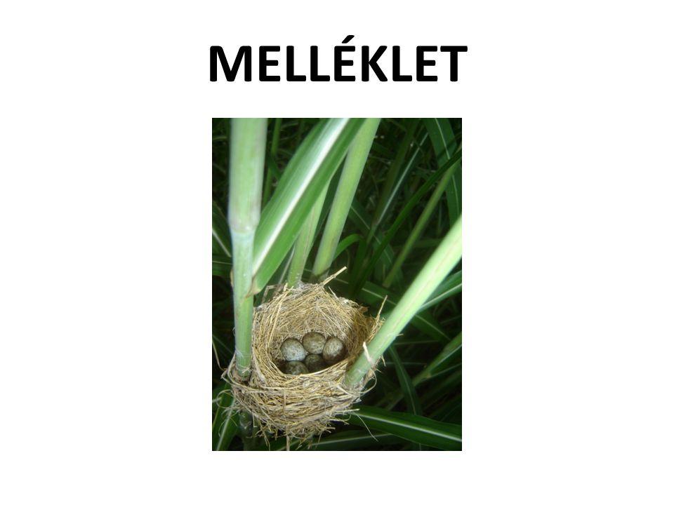 MELLÉKLET