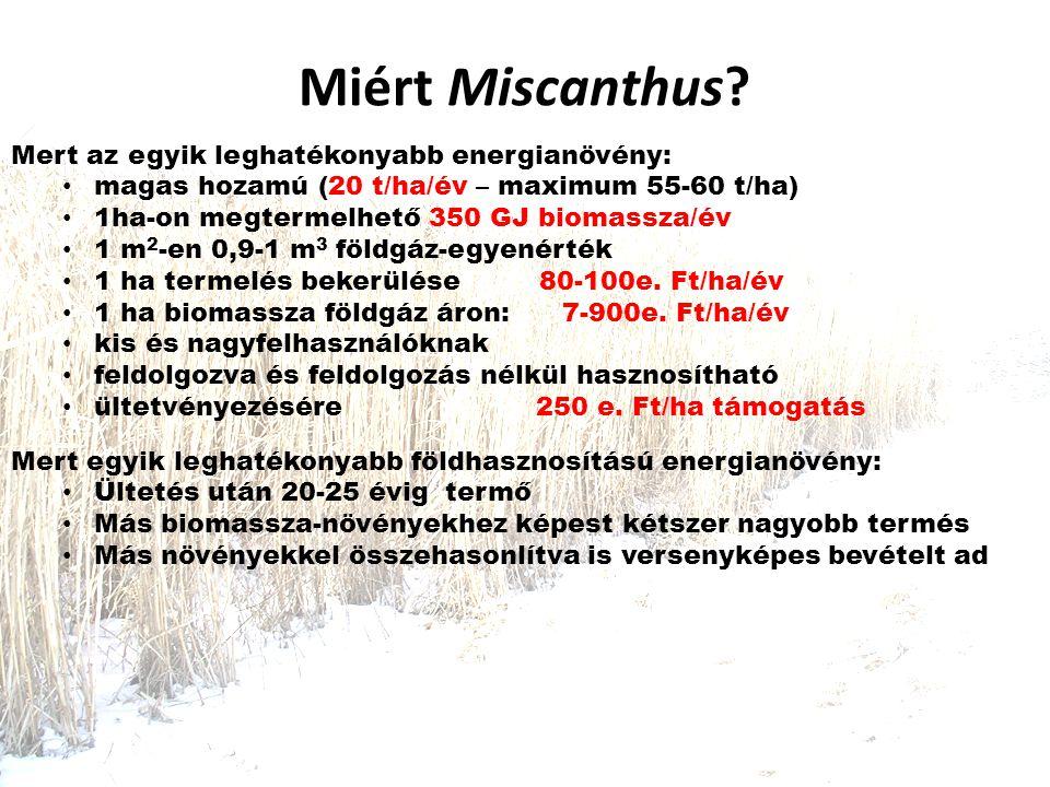 Miért Miscanthus Mert az egyik leghatékonyabb energianövény: