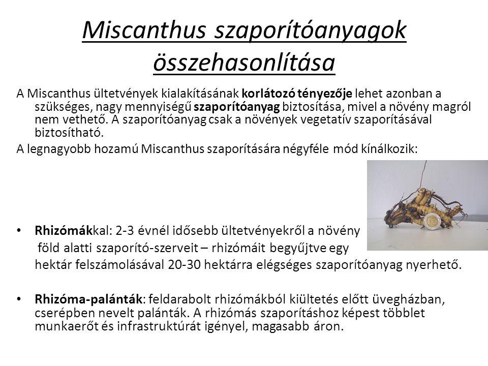 Miscanthus szaporítóanyagok összehasonlítása