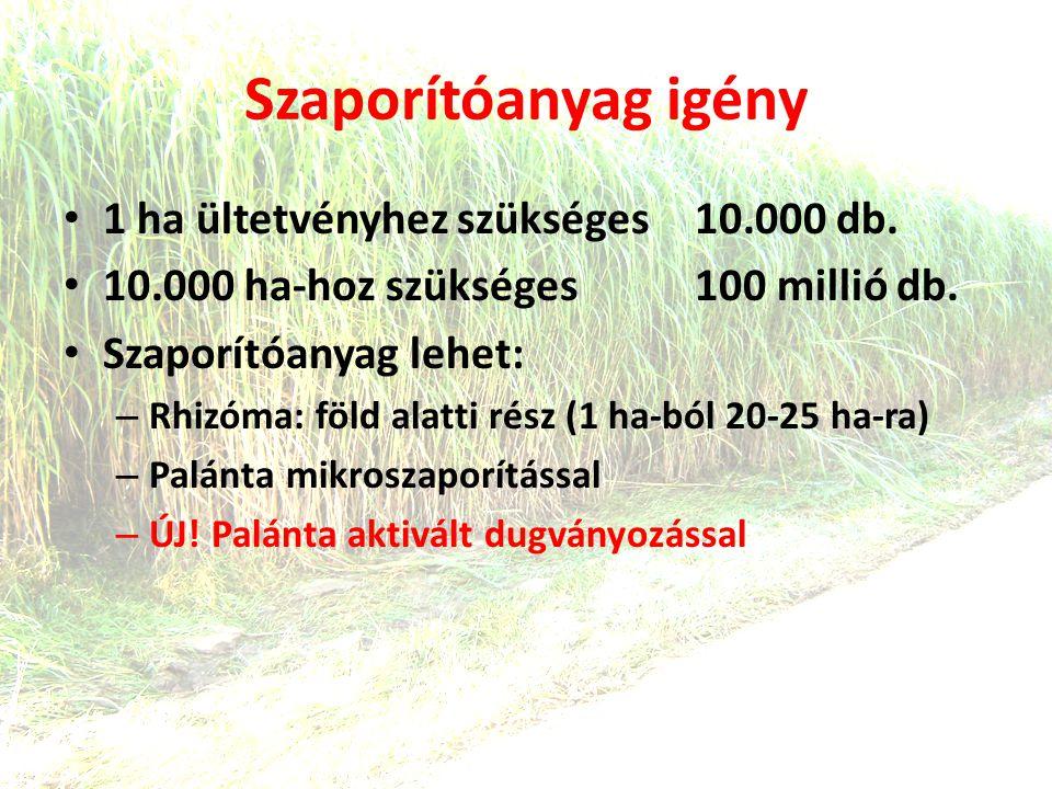 Szaporítóanyag igény 1 ha ültetvényhez szükséges 10.000 db.