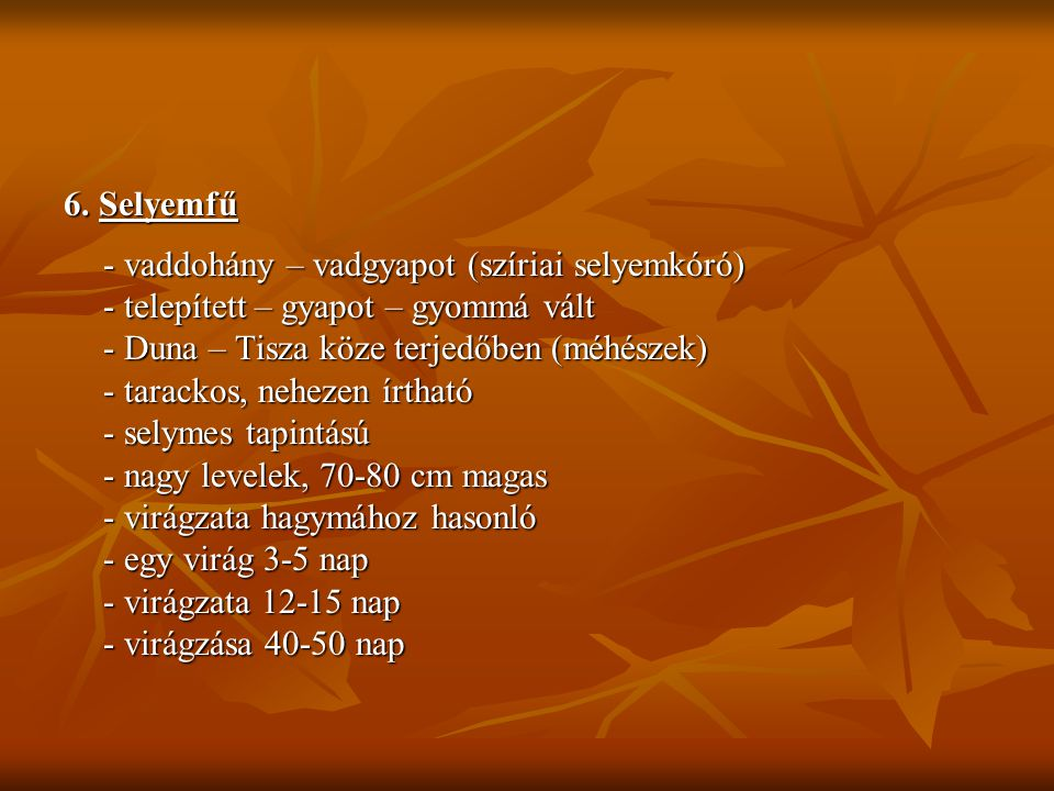 6. Selyemfű - vaddohány – vadgyapot (szíriai selyemkóró) - telepített – gyapot – gyommá vált. - Duna – Tisza köze terjedőben (méhészek)
